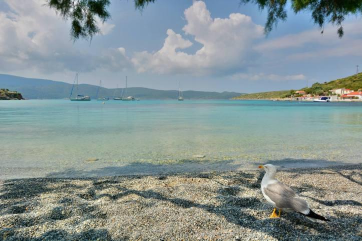 posidonion beach2